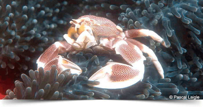 south_east_asia_dreams_gallery_crab_1428893922.7074