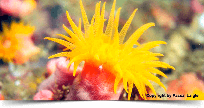 south_east_asia_dreams_gallery_similan-koh-bon-richelieu-rock-5-days-safari-flower_1425036062.8458